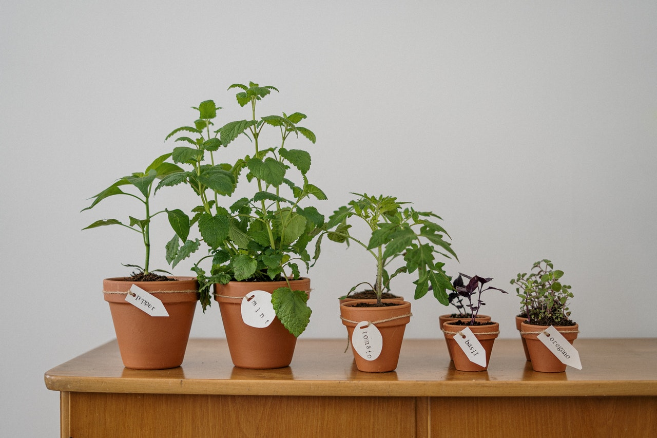 5 flowerpots with different stages of growth to represent the phases in Greiner's Growth Model