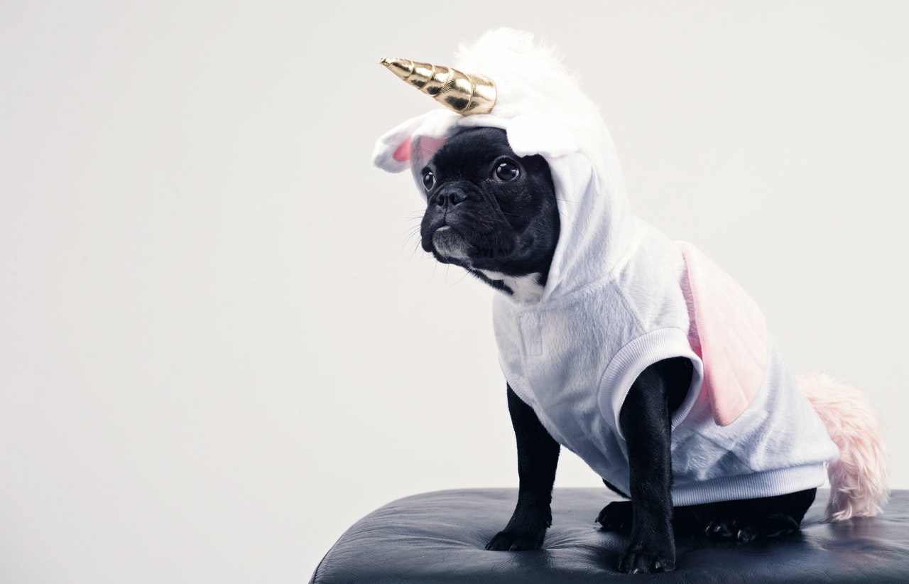 A dog dressed as a unicorn