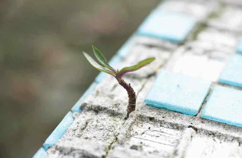 A small shoot grows from concrete