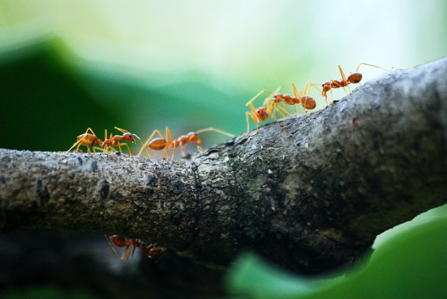 Ants representing various small attacks on a competitor